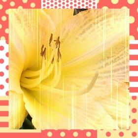 Profile 81044 pi 2013 10 09 15 33 56 deco