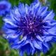 Thumb_32538_pi_blue