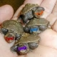 Thumb_46721_pi_turtles